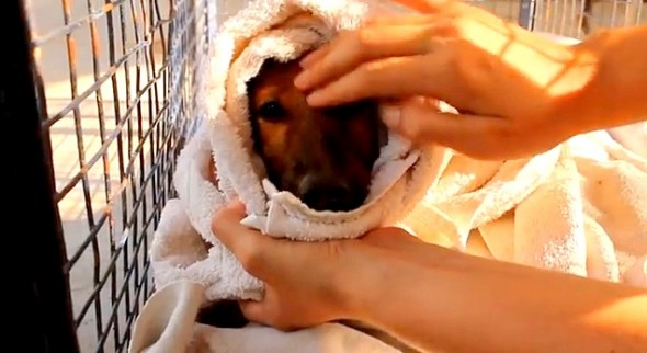 6.18.14 - Indian Community Rescues Drowning Puppy Moments from Death3
