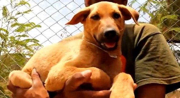 6.18.14 - Indian Community Rescues Drowning Puppy Moments from Death4