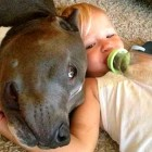 """14 """"Aggressive"""" Dogs Who Totally Forgot to Be Vicious"""