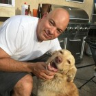 Dog Missing in Tahoe National Forest for 20 Months Reunites with Family