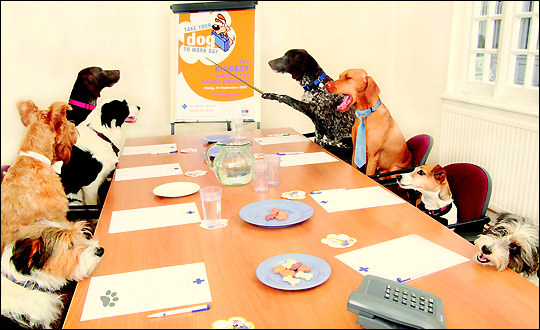 """Friday Is """"Take Your Dog to Work Day"""""""