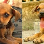 Travelers Rescue Starving Colombian Puppy