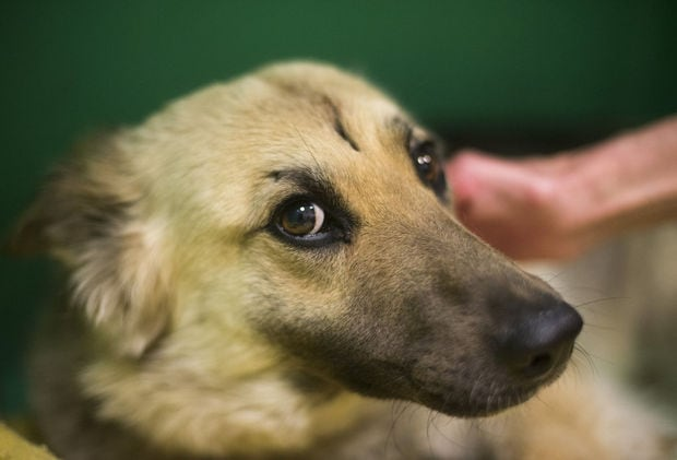 Hit-And-Run Dog to get Much Needed Medical Attention