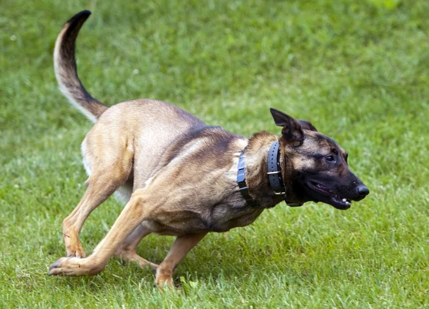 Pennsylvania County Gets New Cadaver Dog