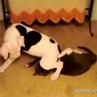 Dogs Get Revenge on Devious Cats