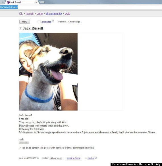 Attempted Resale of Shelter Dog has People Outraged