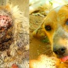 Dying Street Dog Gets the Rescue of a Lifetime