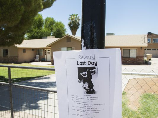 6.29.14 - UPDATE Dog that Escaped Death at Arizona Boarding Facility Still Missing