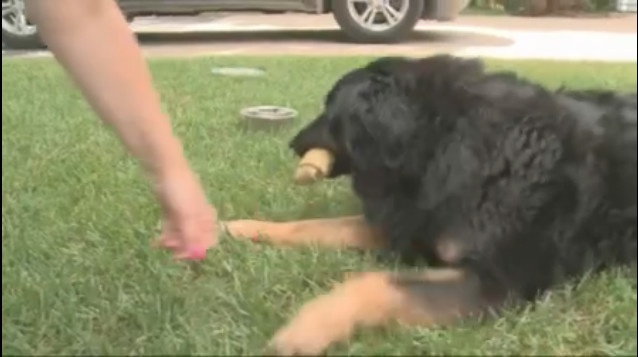 Woman Finds Missing Wedding Ring Coughed Up by Dog