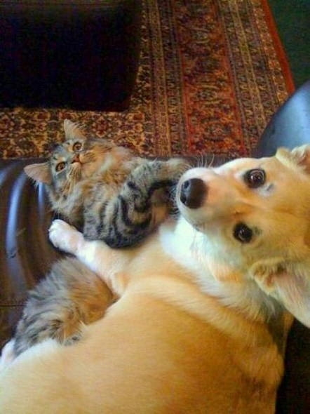 6.4.14 - Dogs and Cats Who Love to Cuddle1