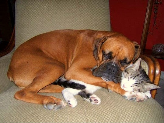 6.4.14 - Dogs and Cats Who Love to Cuddle10