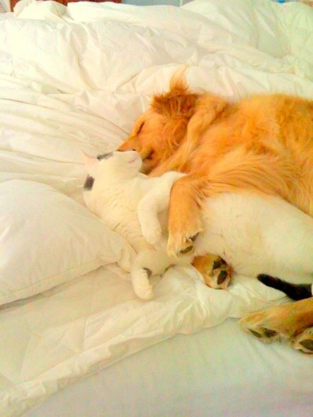 6.4.14 - Dogs and Cats Who Love to Cuddle11