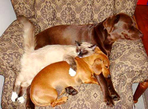 6.4.14 - Dogs and Cats Who Love to Cuddle13