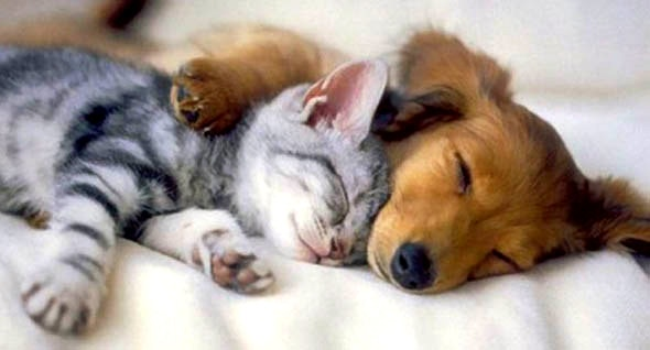 6.4.14 - Dogs and Cats Who Love to Cuddle15