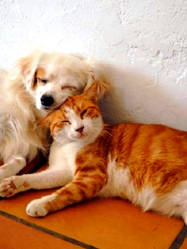 6.4.14 - Dogs and Cats Who Love to Cuddle16