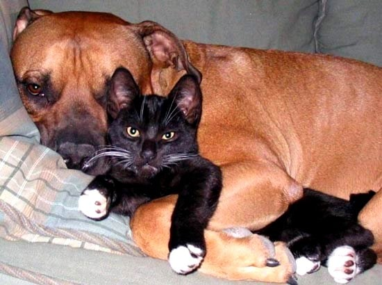 6.4.14 - Dogs and Cats Who Love to Cuddle17
