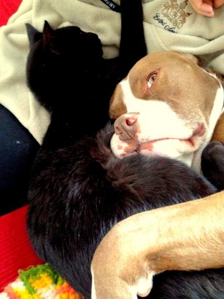6.4.14 - Dogs and Cats Who Love to Cuddle18