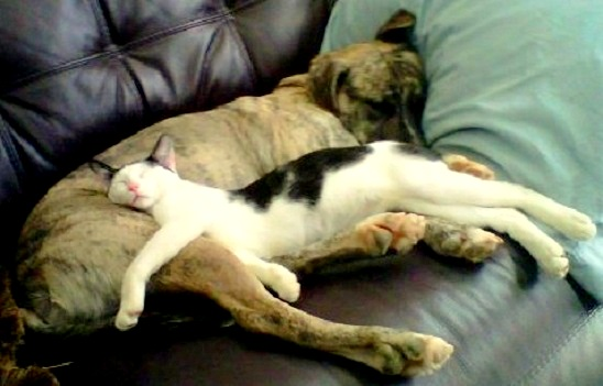 6.4.14 - Dogs and Cats Who Love to Cuddle19