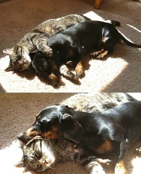 6.4.14 - Dogs and Cats Who Love to Cuddle2