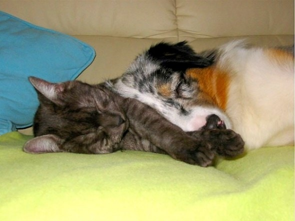 6.4.14 - Dogs and Cats Who Love to Cuddle20