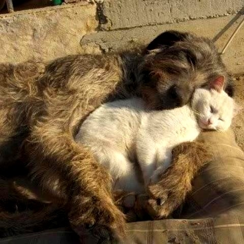 6.4.14 - Dogs and Cats Who Love to Cuddle22