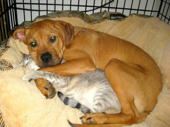 6.4.14 - Dogs and Cats Who Love to Cuddle23