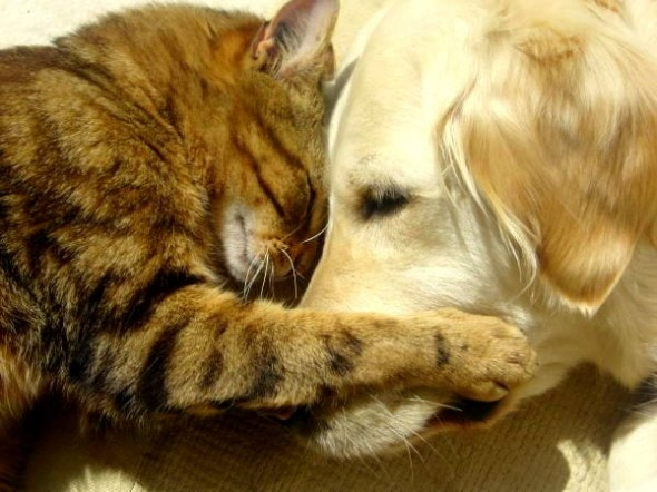 6.4.14 - Dogs and Cats Who Love to Cuddle25
