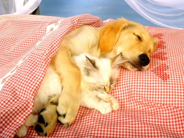 6.4.14 - Dogs and Cats Who Love to Cuddle26