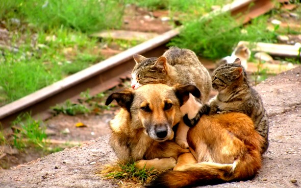 6.4.14 - Dogs and Cats Who Love to Cuddle27