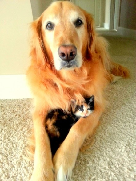 6.4.14 - Dogs and Cats Who Love to Cuddle28