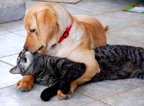 6.4.14 - Dogs and Cats Who Love to Cuddle29