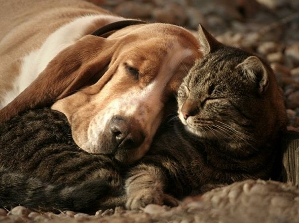 6.4.14 - Dogs and Cats Who Love to Cuddle3