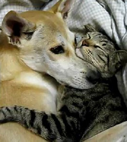 6.4.14 - Dogs and Cats Who Love to Cuddle31