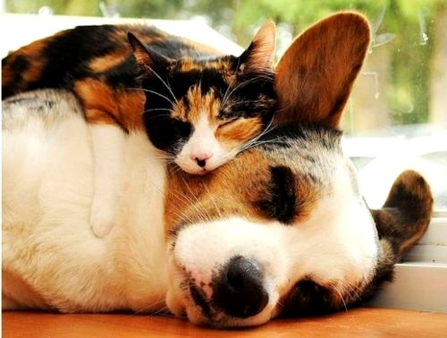 6.4.14 - Dogs and Cats Who Love to Cuddle32