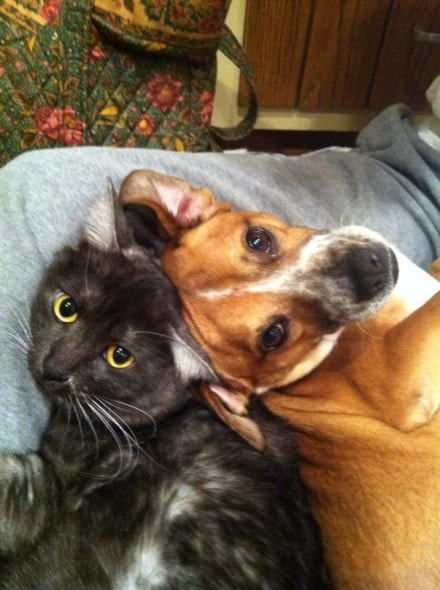 6.4.14 - Dogs and Cats Who Love to Cuddle33