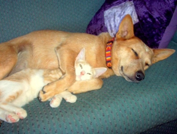 6.4.14 - Dogs and Cats Who Love to Cuddle34