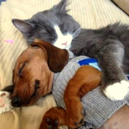 6.4.14 - Dogs and Cats Who Love to Cuddle37