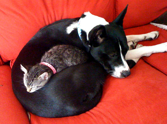 6.4.14 - Dogs and Cats Who Love to Cuddle38