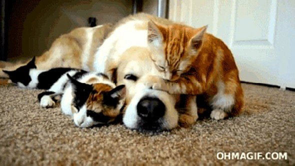 6.4.14 - Dogs and Cats Who Love to Cuddle39