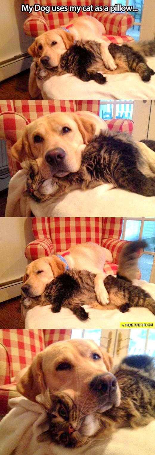 6.4.14 - Dogs and Cats Who Love to Cuddle4