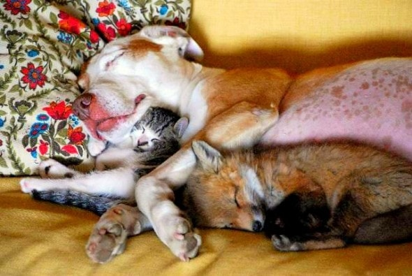 6.4.14 - Dogs and Cats Who Love to Cuddle40