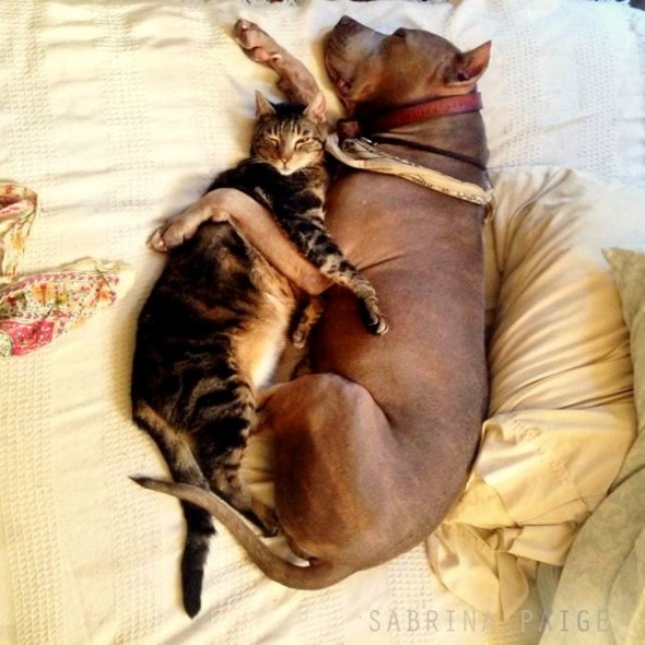 6.4.14 - Dogs and Cats Who Love to Cuddle5