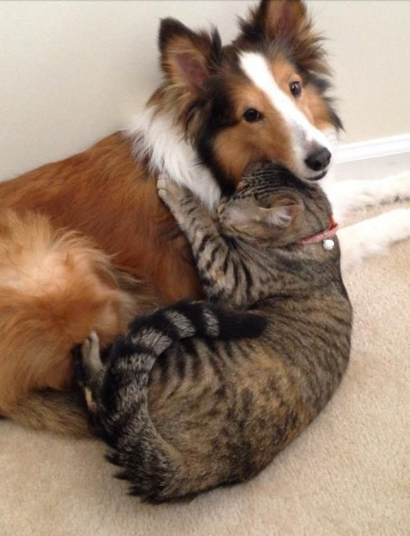 40 Dogs And Cats Who Just Love To Cuddle Life With Dogs
