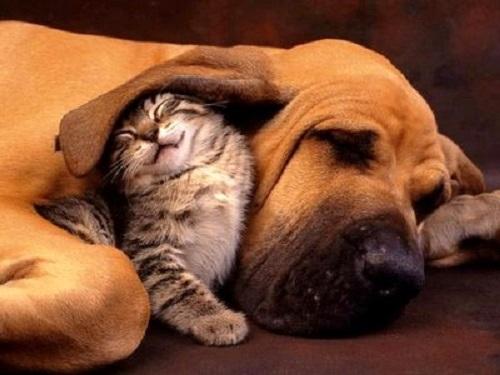 Risultati immagini per sonni tranquilli cane