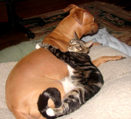 6.4.14 - Dogs and Cats Who Love to Cuddle8
