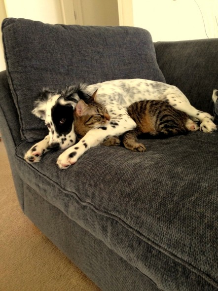 6.4.14 - Dogs and Cats Who Love to Cuddle9