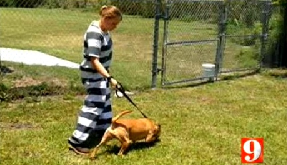 6.4.14 - Florida Inmates to Care for Shelter Dogs1