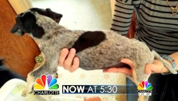 6.4.14 - Woman Rescues Deputy's Dog1