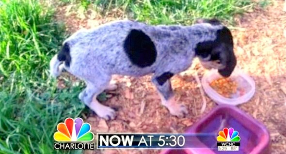 6.4.14 - Woman Rescues Deputy's Dog2