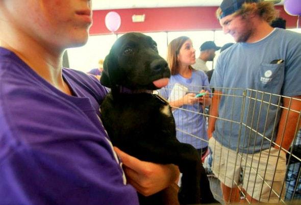 6.5.14 - 15000 Animals Find Homes in Nationwide Adoption Marathon7